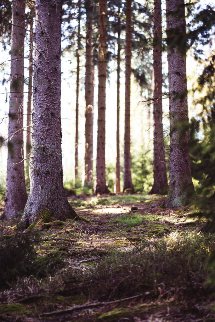 Bisschen Wald