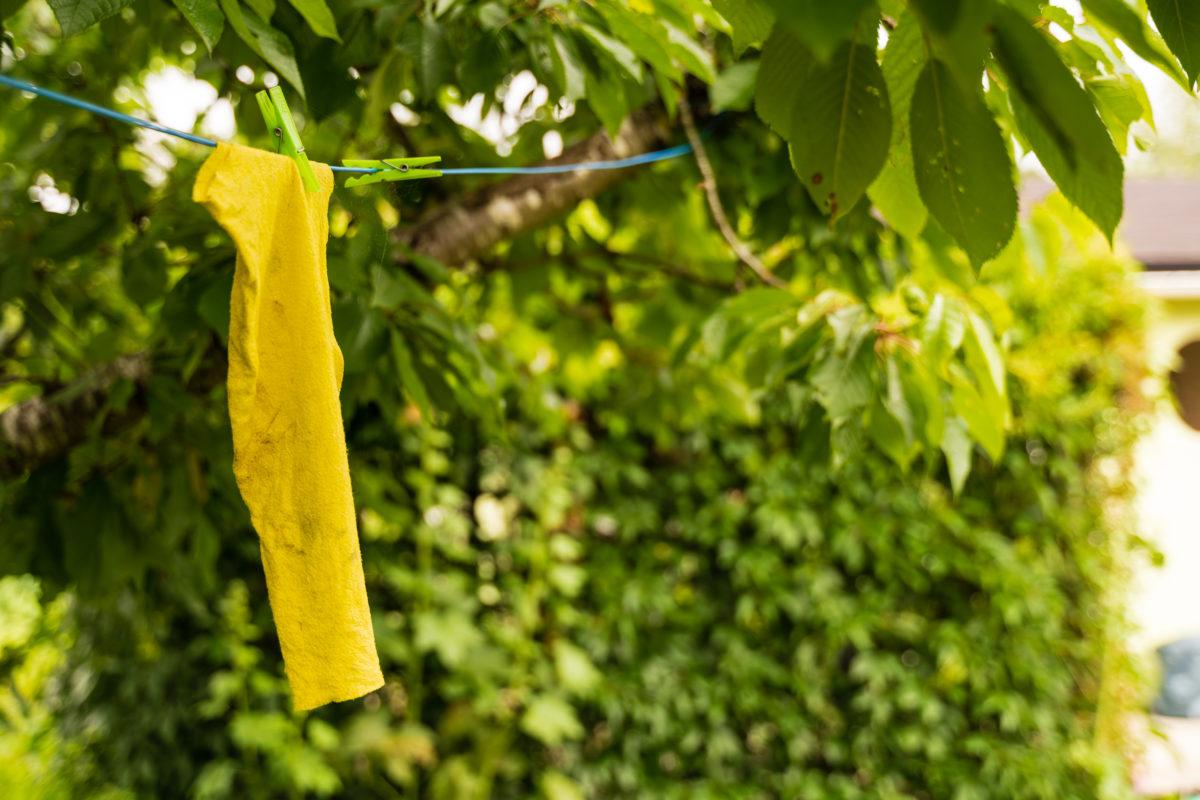 Wäsche im Baum trocknend