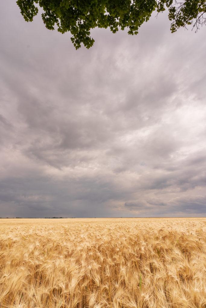 Feld mit Wolken